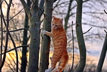 cat-1140349_1920